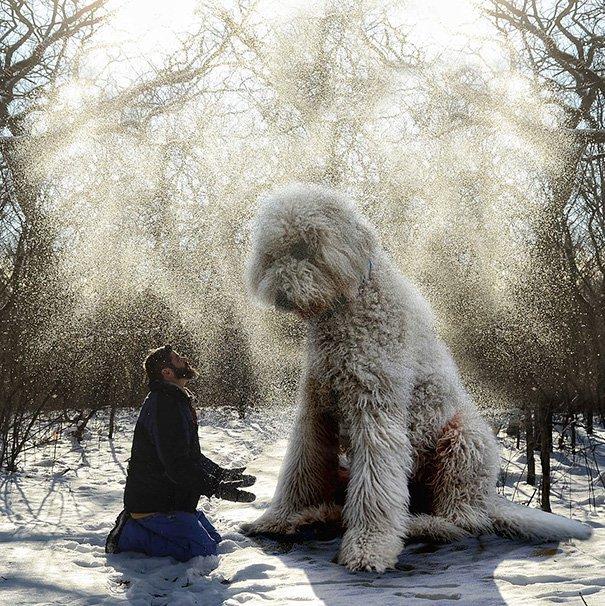 Perro Gigante 7