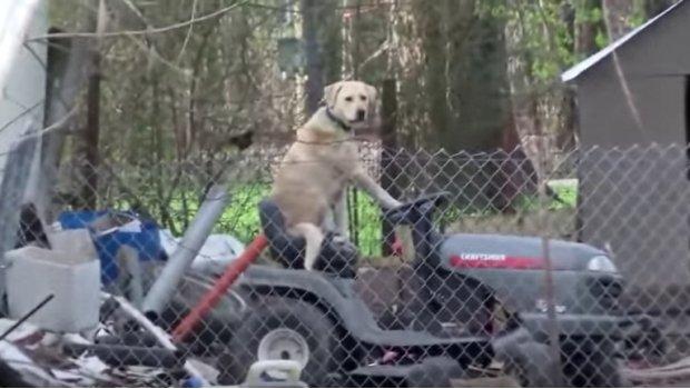 perro tractor