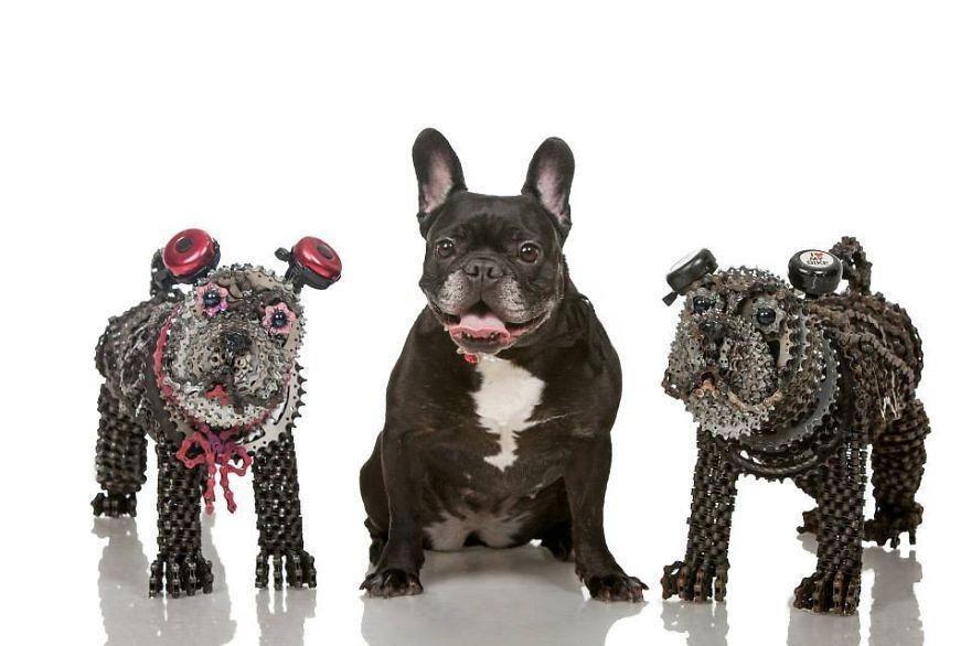perros bicicletas (4)