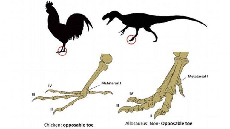 Pollo dinosaurio