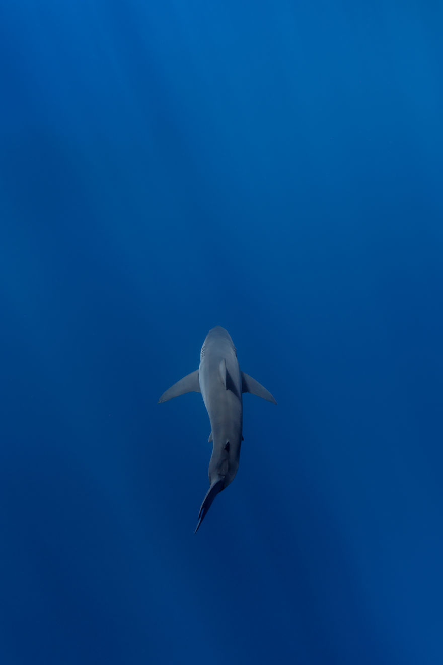 Really-great-white-sharks-I-photograph-the-species-in-a-hopefully-non-scary-way-5__880