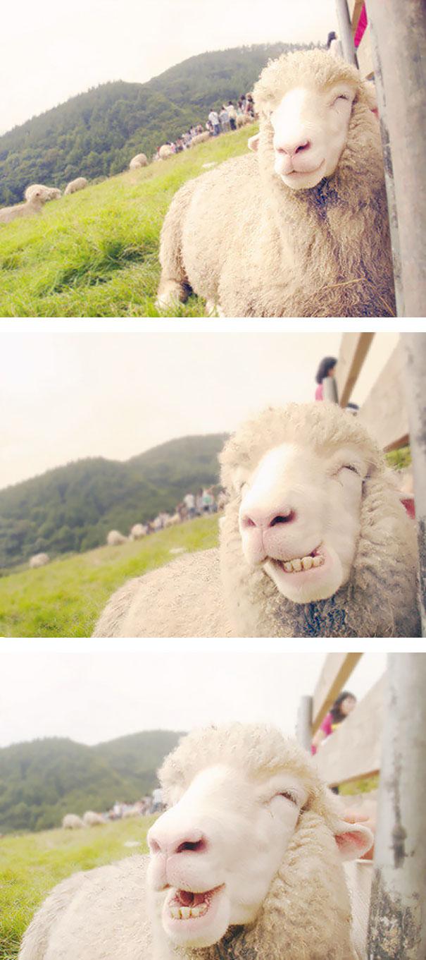 animales-con-sonrisa-15 (1)