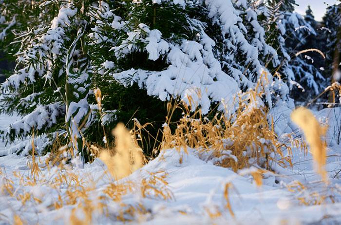 camouflage-bodypainting-metamorphosis-leonie-gene-jorg-dusterwald-10-5718a99d973ca__700