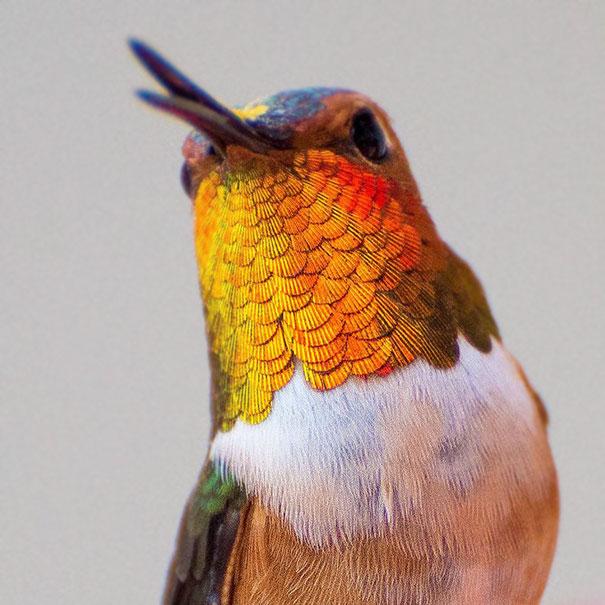colibri (7)
