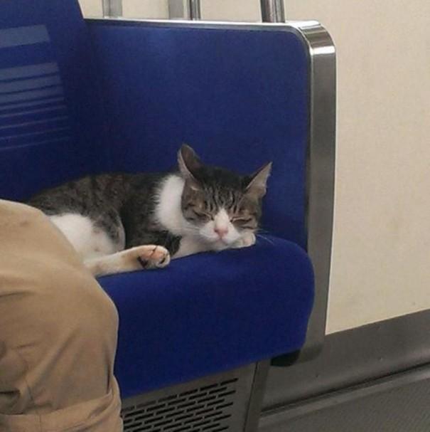 gato-usuario-metro-tokyo-1