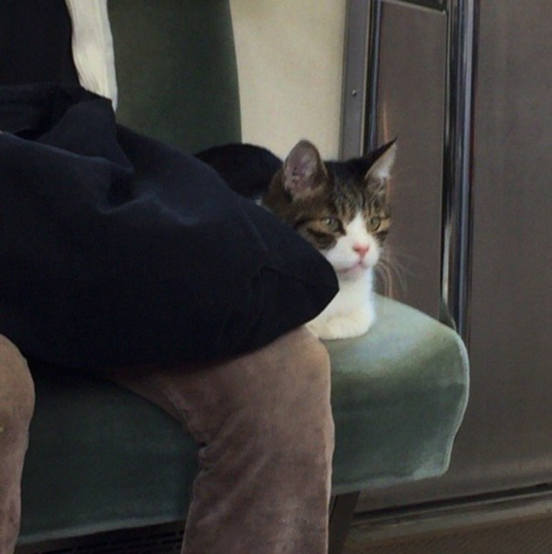 gato-usuario-metro-tokyo-2
