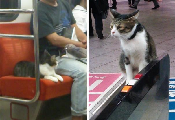 gato-usuario-metro-tokyo-3