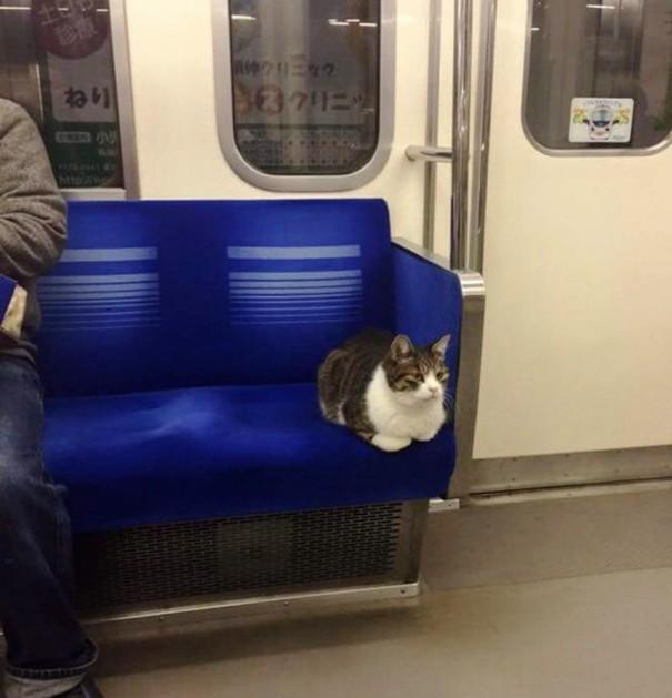 gato-usuario-metro-tokyo-5