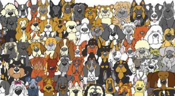 oso panda perros2