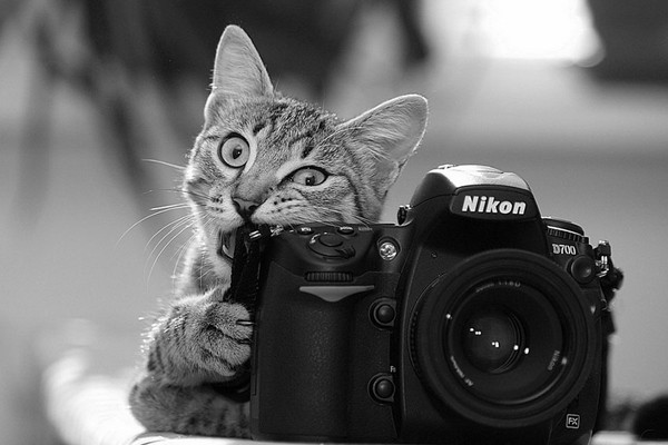 Simpaticos-animales-imitando-fotografos-12