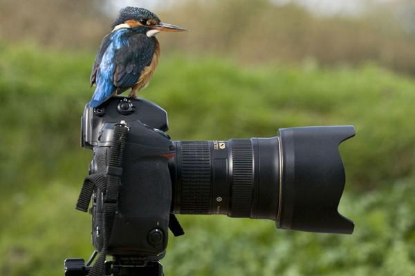 Simpaticos-animales-imitando-fotografos-18
