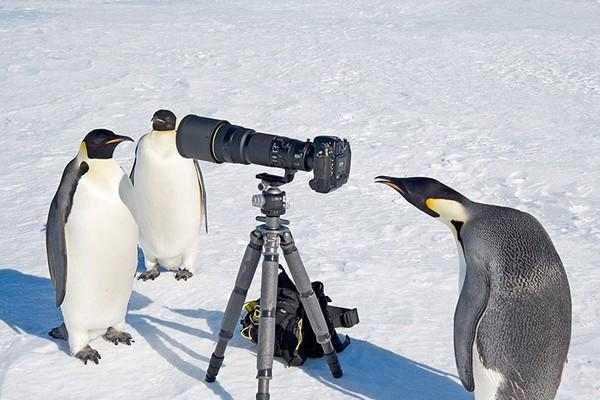 Simpaticos-animales-imitando-fotografos-3