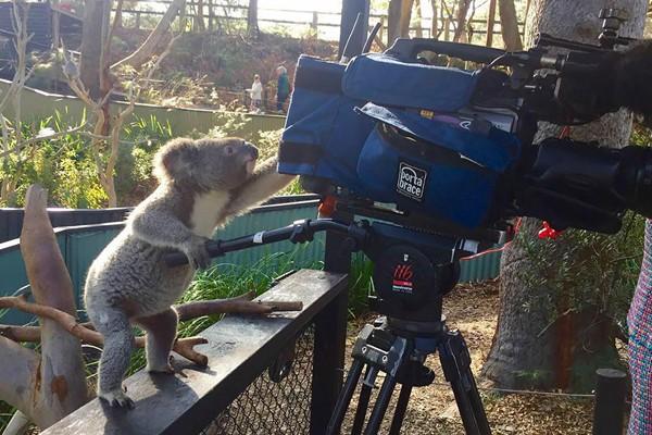Simpaticos-animales-imitando-fotografos-4