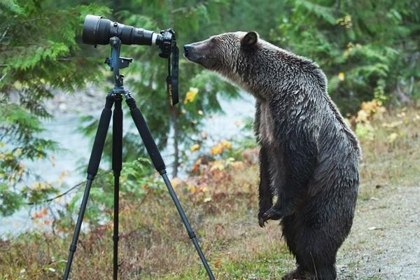 Simpaticos-animales-imitando-fotografos-5