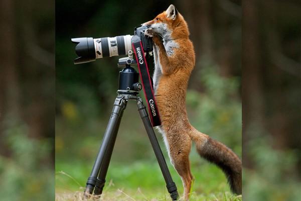 Simpaticos-animales-imitando-fotografos-6