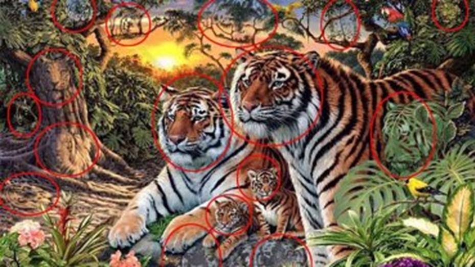 tigres en la foto