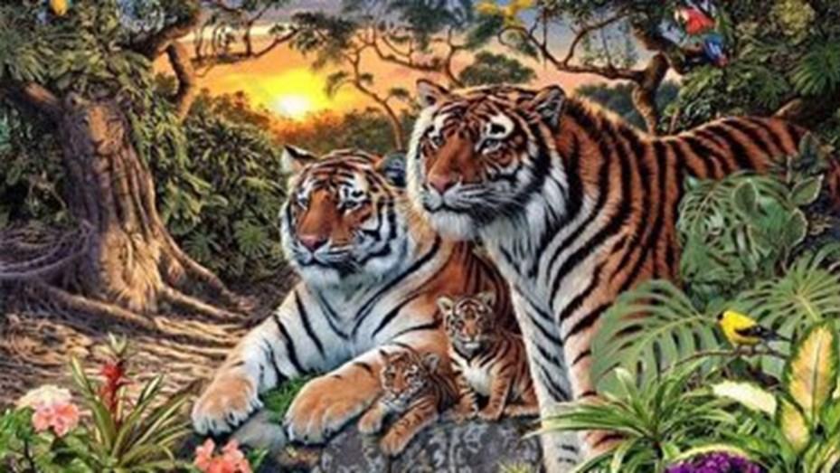 tigres en la foto1