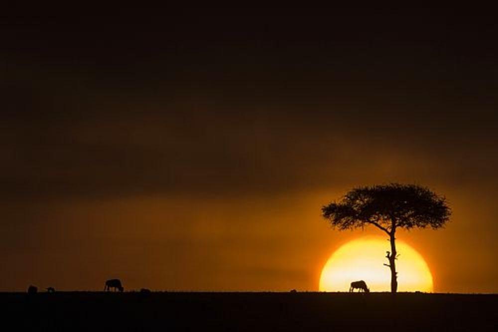 Parque Nacional de Masai Mara, Kenia
