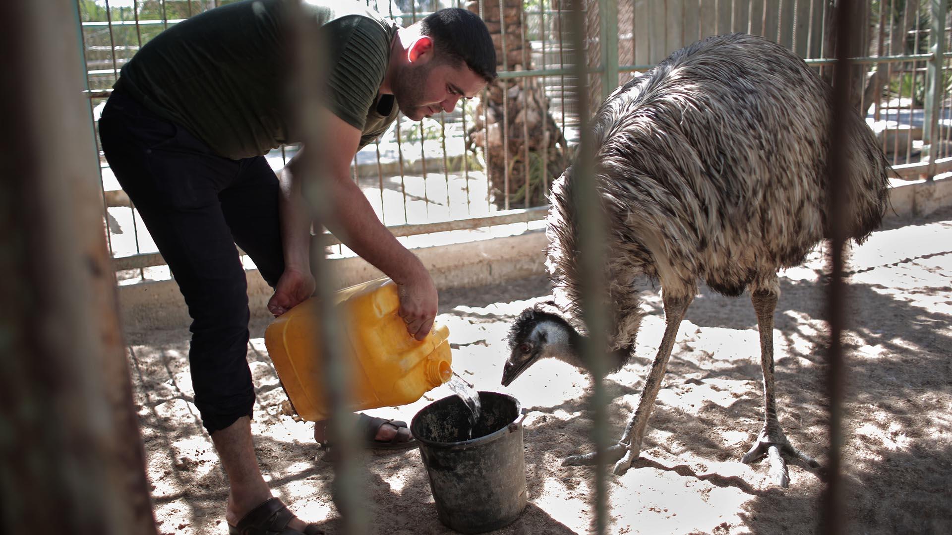 Mideast Gaza Zoo Rescue
