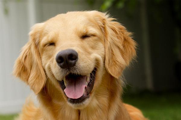 perro-gracioso-rie