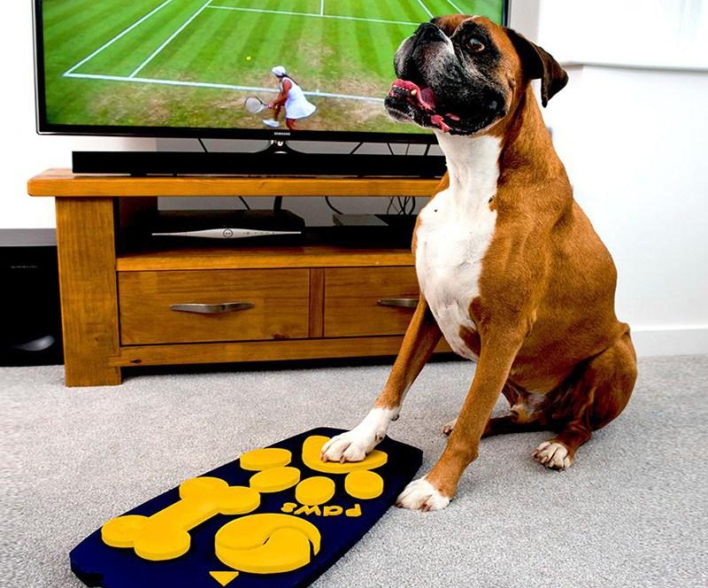 dog-remote-control-02