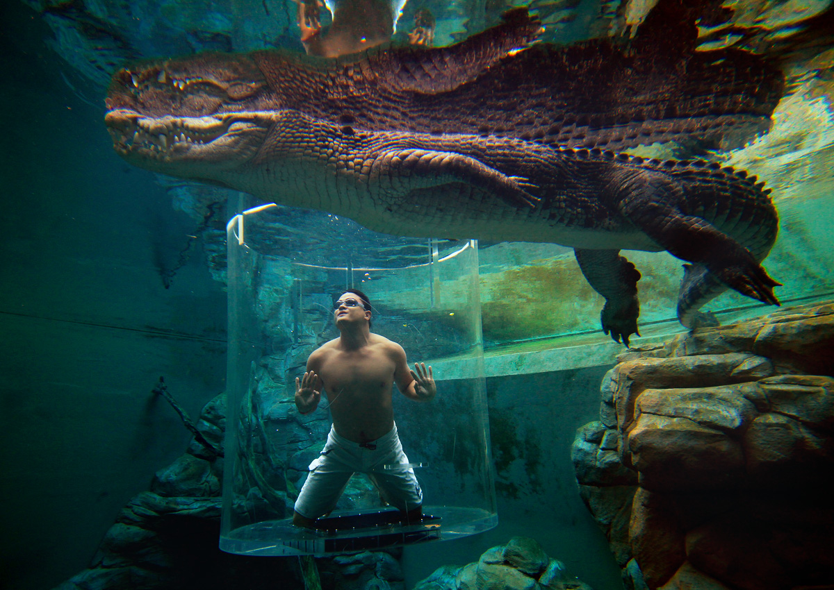 Cage-Saltwater-Crocodiles-Australia