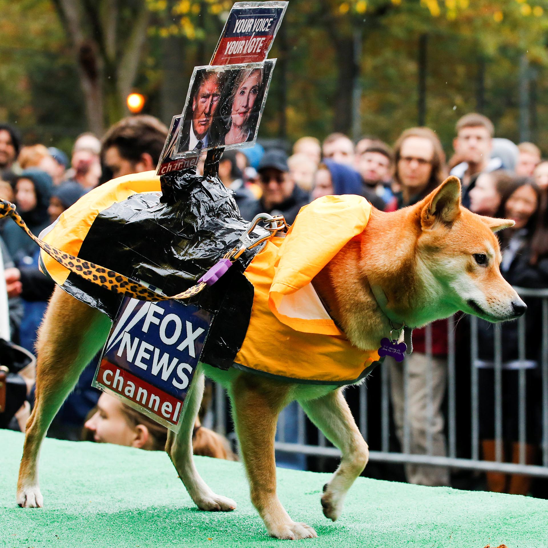 A dog dressed as Fox News channel takes part in the annual halloween dog in New York