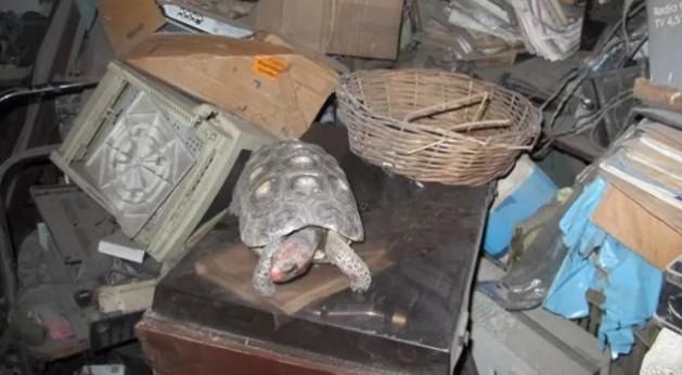 tortuga manuela1
