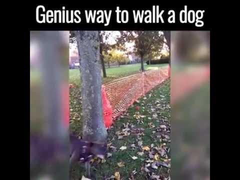 camino para perro