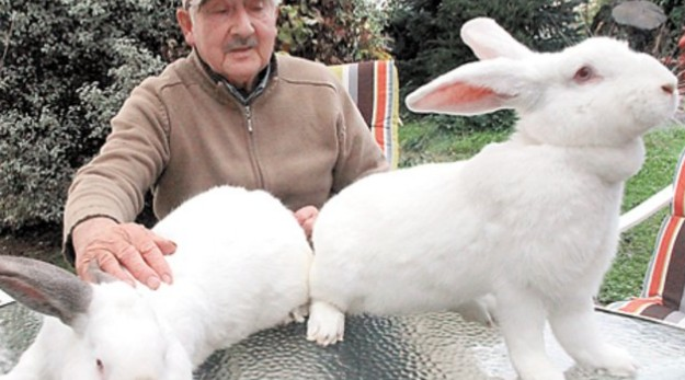 conejos de cena