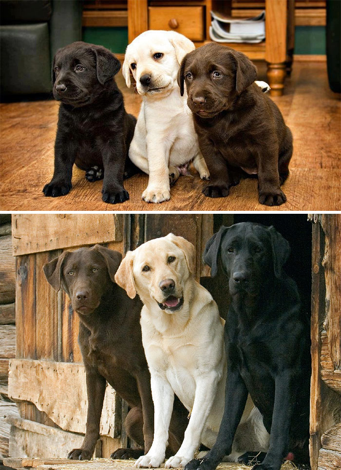 animal-friends-growing-up-together-then-now-5-585bc61016827__700