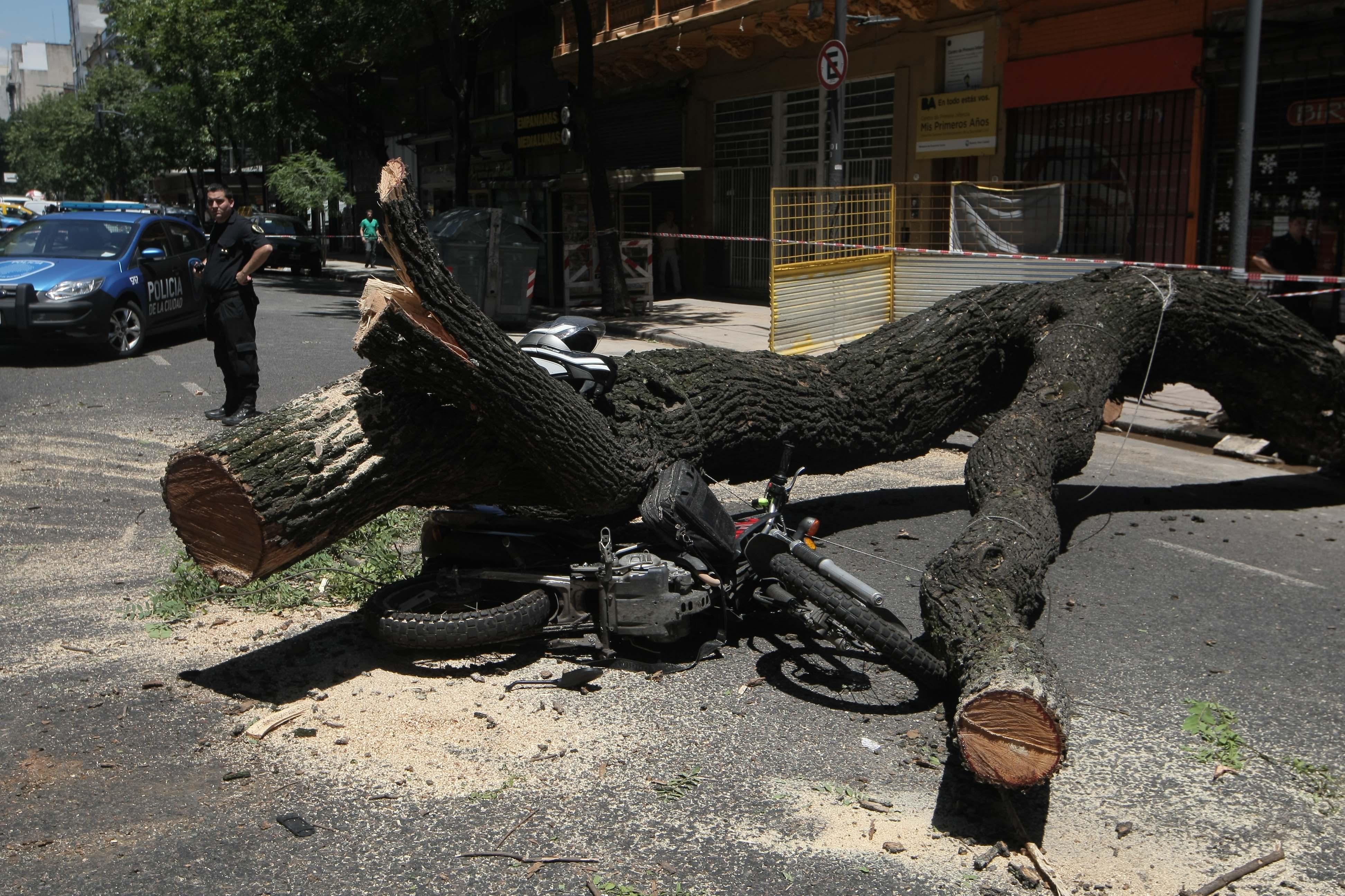 DYN17, BUENOS AIRES 30/01/17, ARBOL CAYO EN LA AVENIDA ENTRE RIOS AL 900, MATO A MOTOCICLISTA.FOTO.DYN/PABLO MOLINA