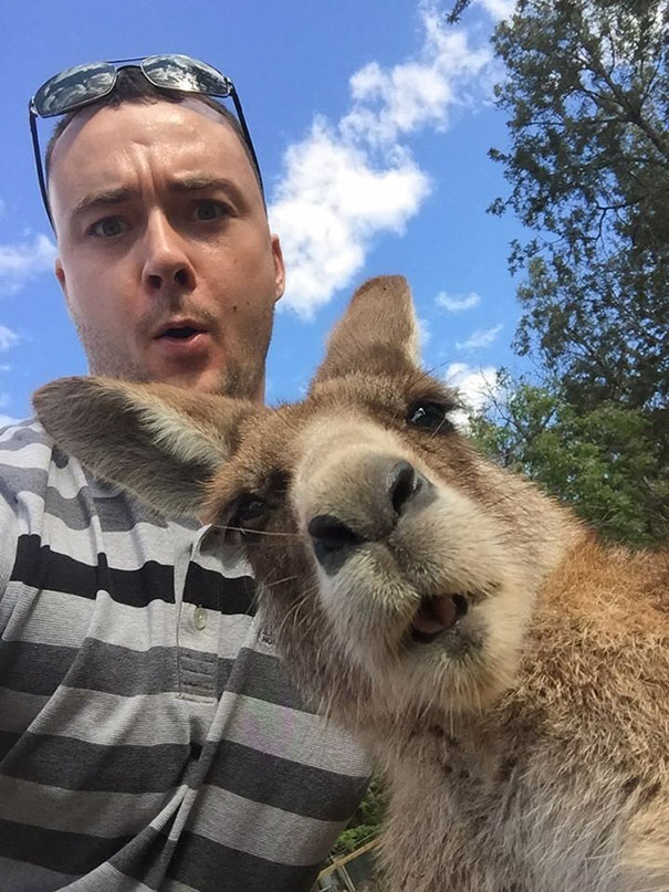 funny-animal-selfies-13-587deb4940f44__605