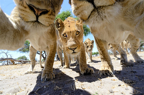 funny-animal-selfies-587df8d93d11e__605
