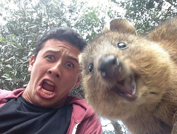 funny-animal-selfies-65-587e1e9b9d885__605