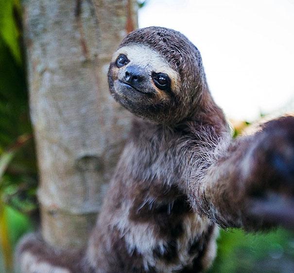 funny-animal-selfies-8-587deb3d94041__605