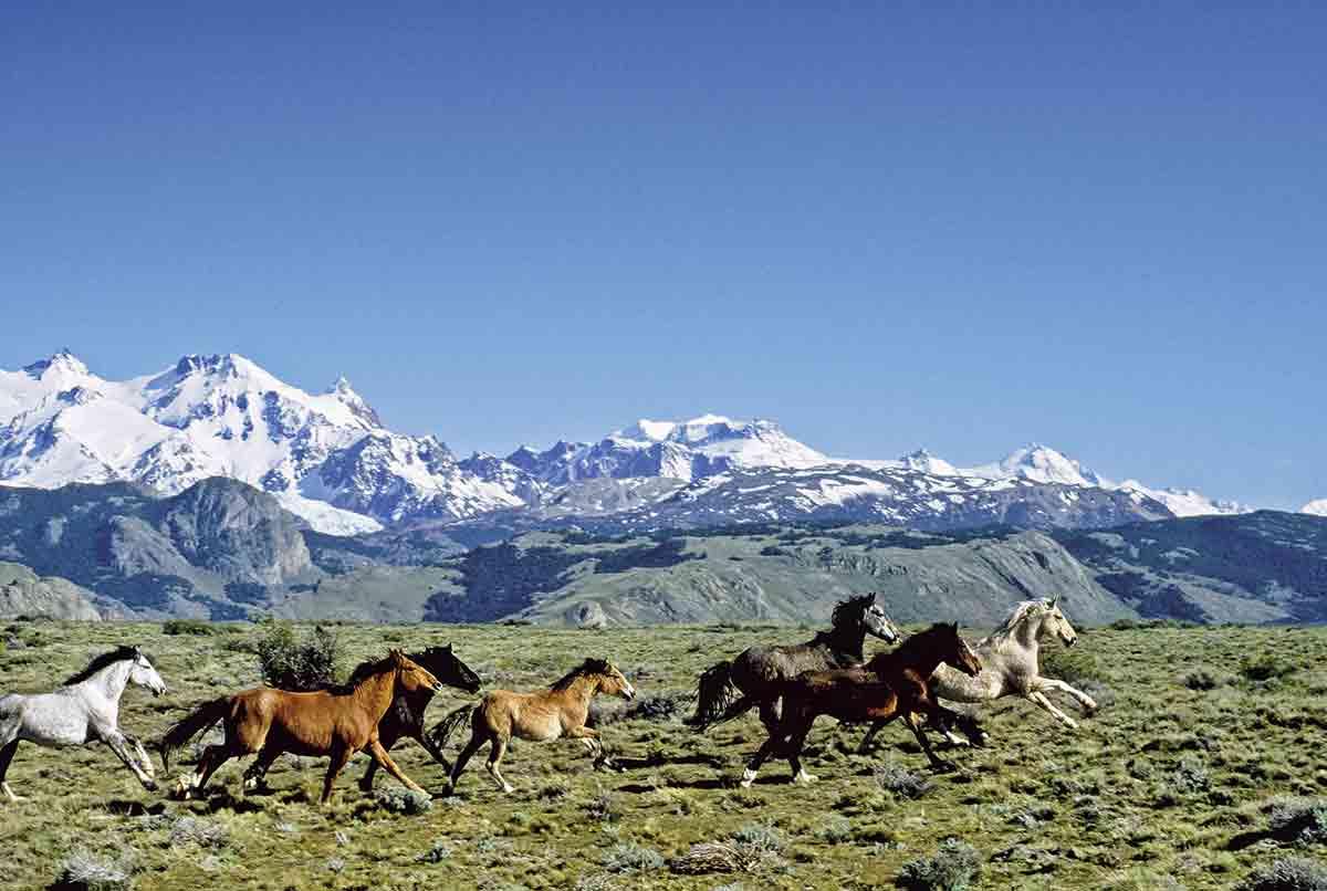 Patagonia4