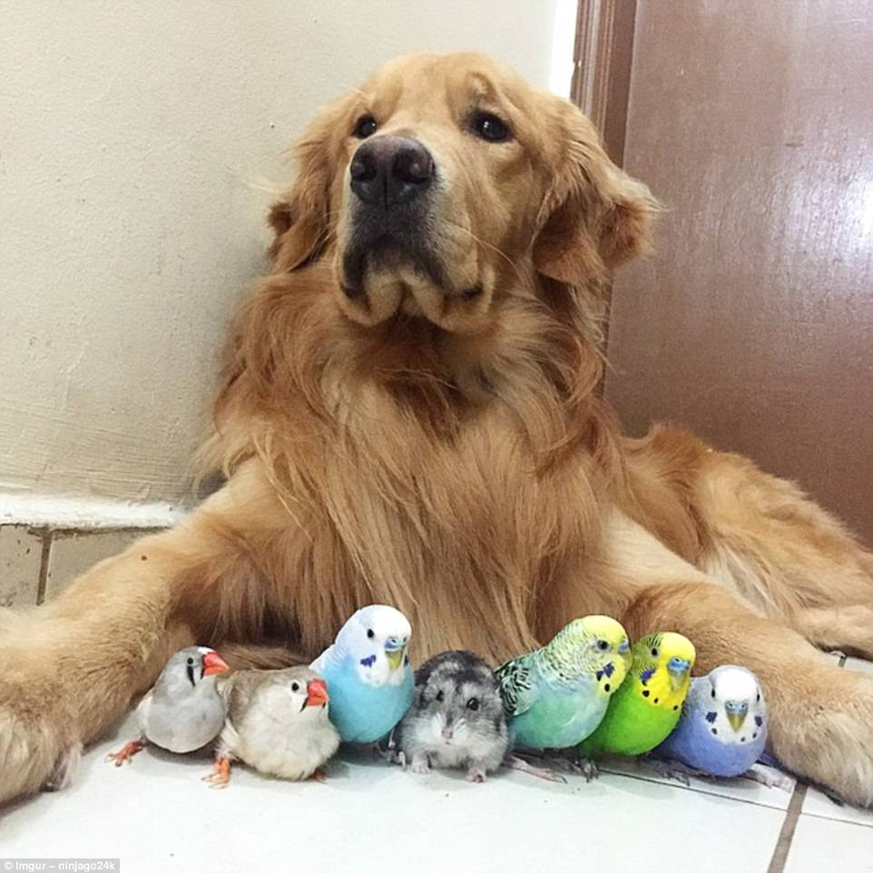 3EF4E9B100000578-4379890-A_dog_8_birds_and_cute_hamster_best_friends_ever-a-63_1491379088145