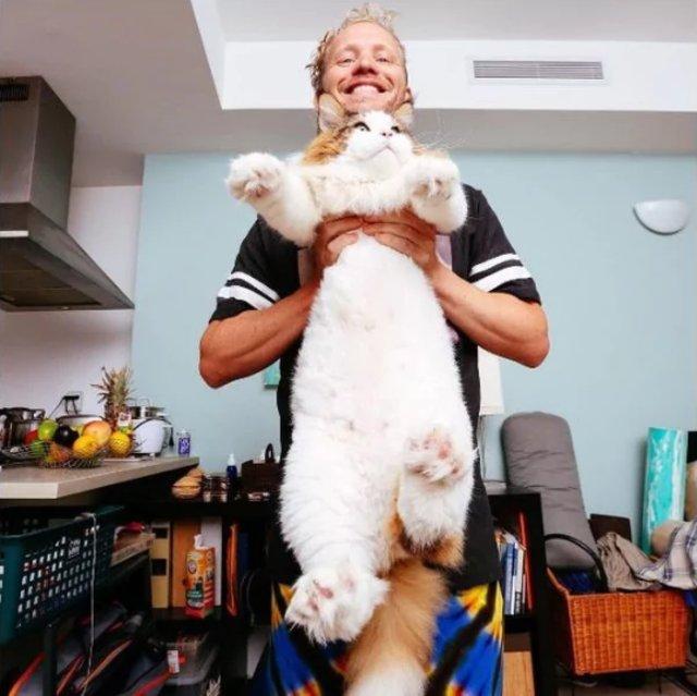 gato enorme1