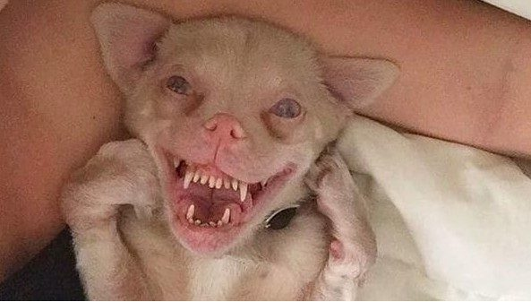 perro murcielago