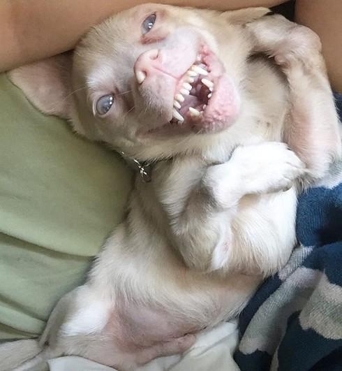 perro murcielago1
