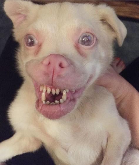 perro murcielago3