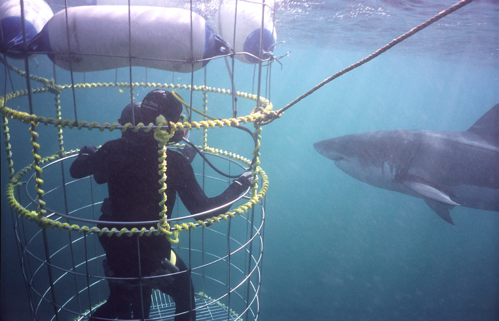 Shark cage diving at Grootbos