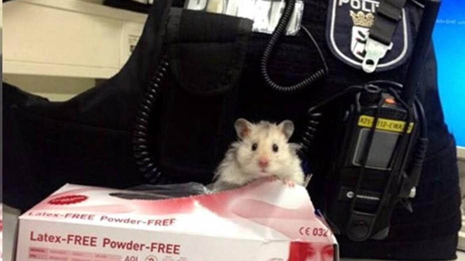 hamster policia1
