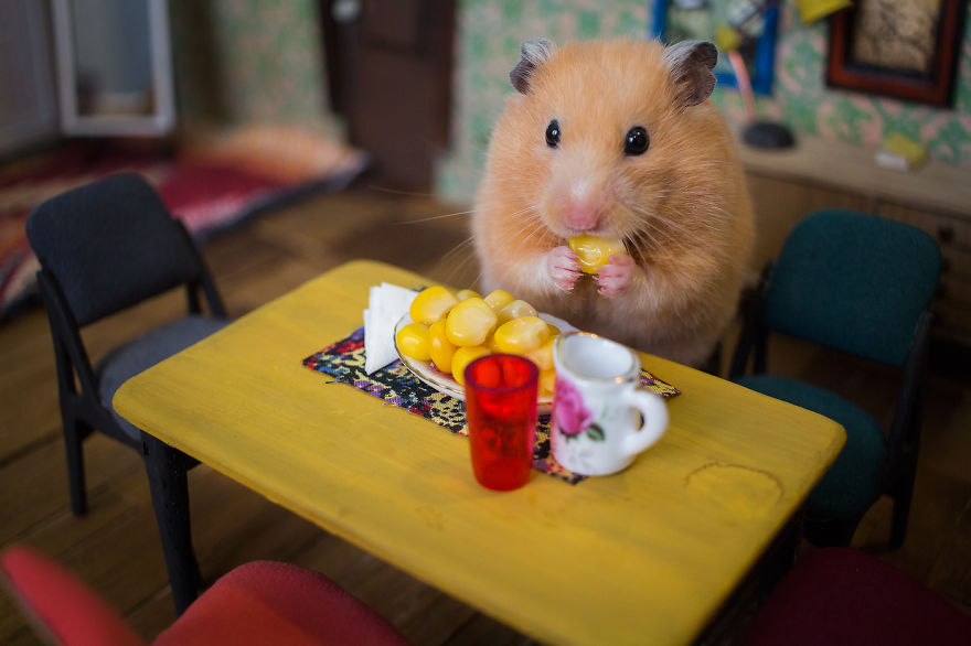 Crafted-miniature-town-for-HUNGRY-HUNGRY-HAMSTERS-online-series-5935d40f144a4__880