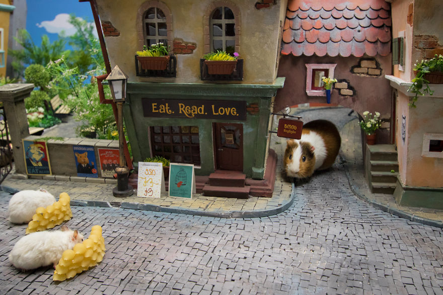 Crafted-miniature-town-for-HUNGRY-HUNGRY-HAMSTERS-online-series-5935d52dc52bc__880