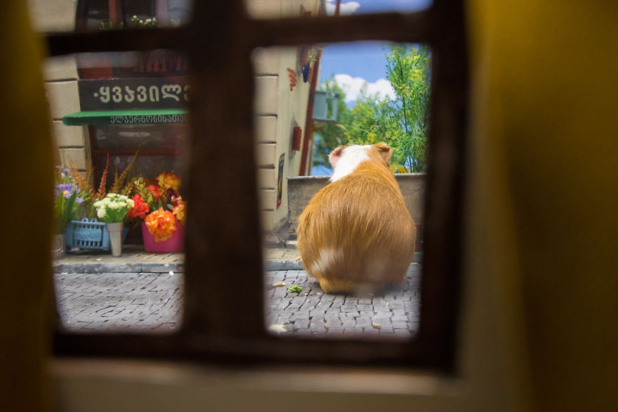 Crafted-miniature-town-for-HUNGRY-HUNGRY-HAMSTERS-online-series-5935d54b803bf__880