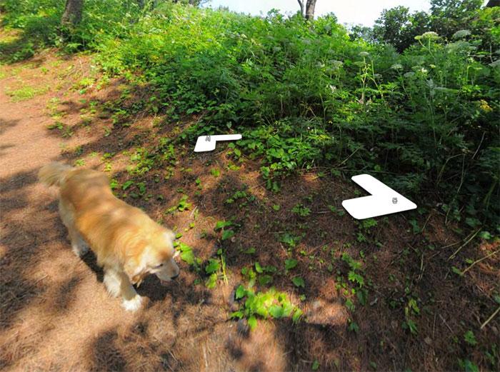 dog-follows-street-view-photographer-south-korea-13-593fba6f953e3__700