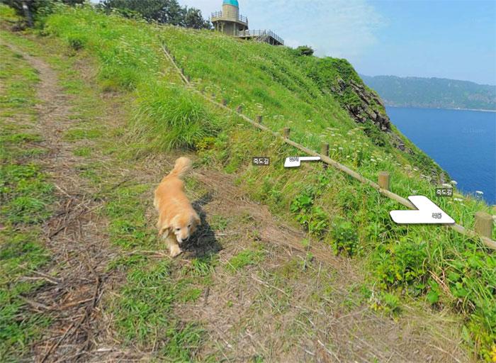 dog-follows-street-view-photographer-south-korea-7-593fba64912be__700