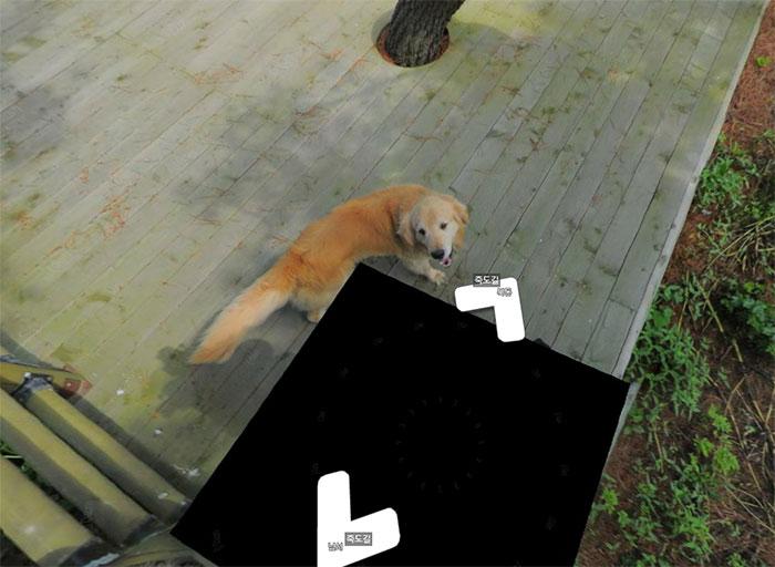 dog-follows-street-view-photographer-south-korea-9-593fba68017a2__700